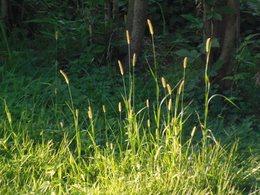 3 夏草が喜んでいる・・・・.jpg