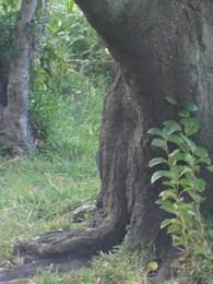 5 もしかして ひょっとして この木の陰から・・・・.jpg