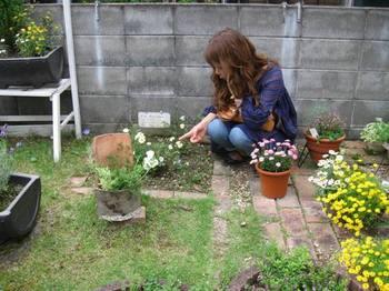 さゆりさんちのお庭に同じバラ発見♪.jpg