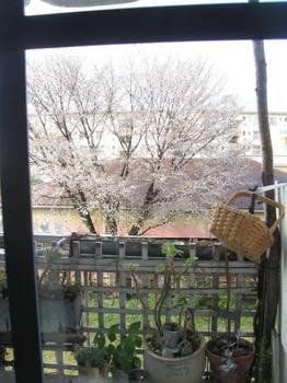 キッチンの窓からのぞいてみました.jpg