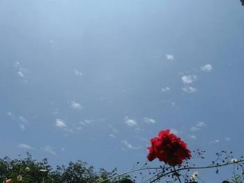 ジリジリと暑い空模様.jpg