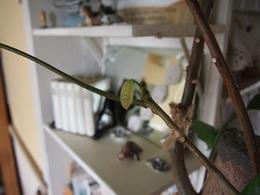 可愛い葉っぱの赤ちゃん.jpg