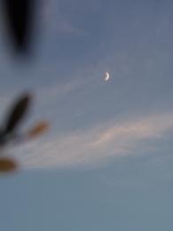 夕がた6時半 良い月です.jpg