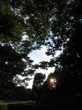 夕日落ちる.jpg