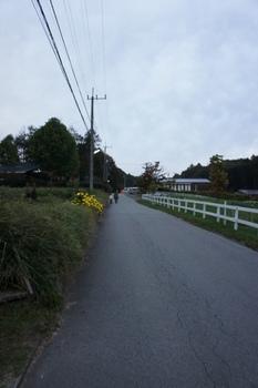 恒例の早朝散歩.jpg