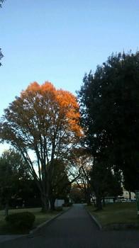 木の先だけに夕日のスポットライトが.jpg
