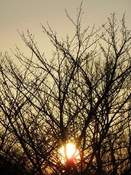木の枝の蕾まで.jpg