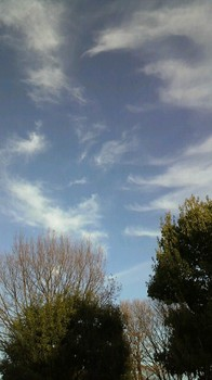 気持ちのいい天気だ.jpg
