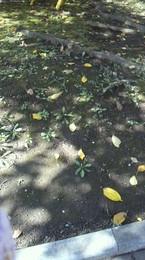 秋が少し落ちています.jpg