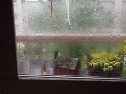 窓に打ちつけるほどの雨です.jpg