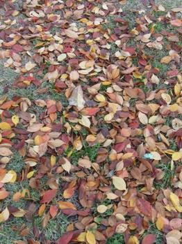 落ち葉をふみふみ帰りました.jpg