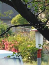 道端の木々も花をつけて.jpg
