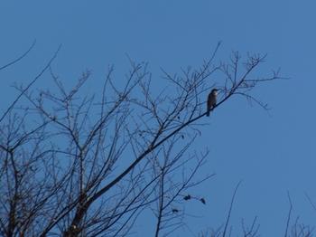 遠くの高い木に止まった鳥.jpg