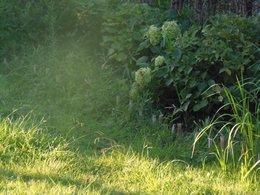 2  何だか朝の光が綺麗で・・・・・.jpg