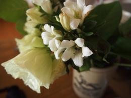 myさんから頂いたお花 まだこんなに綺麗に咲いています.jpg