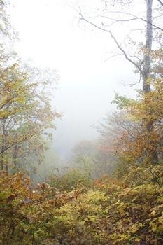 ⑯滝は霧の向こう.jpg