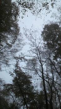 あ~森林浴.jpg