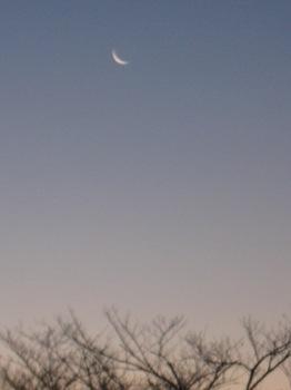 これ以上細くなれない朝の月.jpg