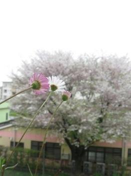 そこにある 温かな春に向かって・・・。.jpg