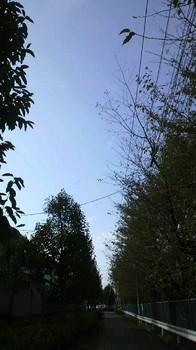 マツキヨに続この道 この空 好きです♪.jpg