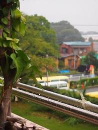 午前中は雨.jpg