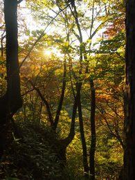 向こうの山から朝陽が昇り木々を照らしはじめて・・・。.jpg