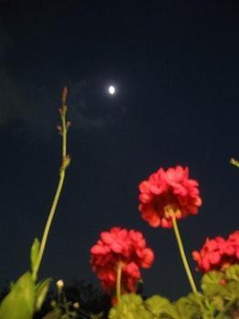 夜を照らす月も・・・。.jpg