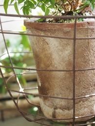 年季の入った素焼きの鉢に入れ替え.jpg