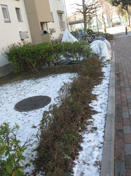 棟の陰は雪が解けないで残っている.jpg