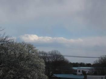 湧き上がる雲を隠すような薄雲 こぶし満開.jpg