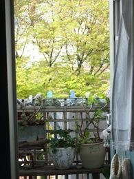 窓いっぱいの桜が今度は緑いっぱいに.jpg