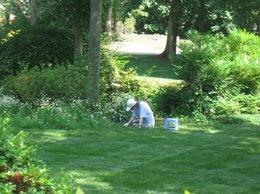 草むしりが大好きだった天沼さん きっと天国でもそうして・・・。.jpg