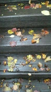 落ち葉の絵が嬉しい階段は.jpg