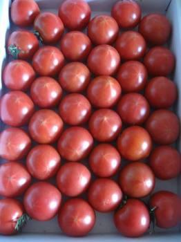 高知からフルーツトマトが・・・。.jpg